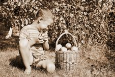 Free Boy With Apples Stock Image - 8245691