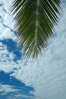 Free Palm And Sky Royalty Free Stock Image - 8248606