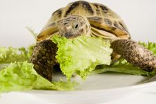 Free Tortoise Stock Photos - 8249003