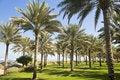Free Beautiful Garden Next To The Beach Royalty Free Stock Photos - 8251198
