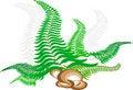 Free Cane Fern. Stock Image - 8258291