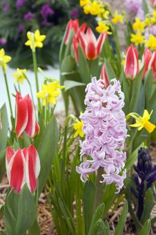 Free Spring Flowers Stock Images - 8250054