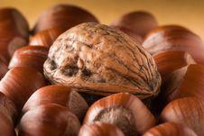 Free Walnut Composition Stock Image - 8252181