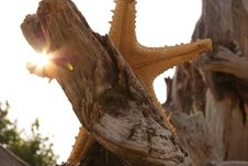 Free Starfish And Sunbeams Stock Images - 8253174