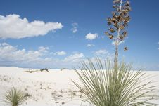 Free White Sands Stock Image - 8253471