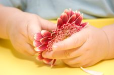 Free A Flower In Baby S Hands Royalty Free Stock Images - 8254799