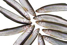 Free Fish Smelt 2 Stock Image - 8256991