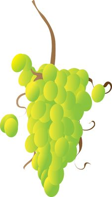 Free Grapes On A Vine Royalty Free Stock Photo - 8259205