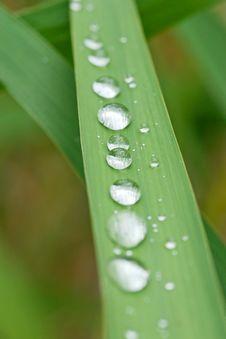 Free Rain Drops On Grass Royalty Free Stock Photo - 8259925