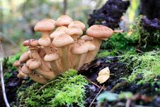 Free Mushrooms Royalty Free Stock Image - 82534896