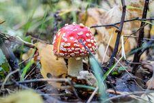 Free Mushrooms Royalty Free Stock Photo - 82534905