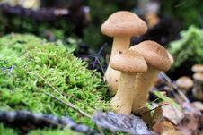 Free Edible Mushrooms Royalty Free Stock Image - 82535016