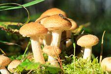 Free Fly On Mushrooms Royalty Free Stock Image - 82545076