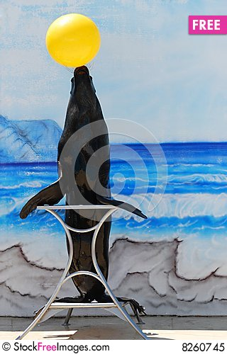 Free Sea Lion On Stand Royalty Free Stock Photo - 8260745