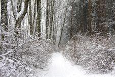 Free Winter Park Royalty Free Stock Image - 8260036