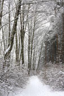 Free Winter Park Stock Photo - 8260040