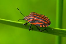 Free Colored Bug Stock Photo - 8260060