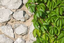 Free Hop On Stone Wall Stock Photography - 8260232