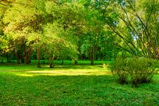 Free Morning In Forest Royalty Free Stock Image - 8260306