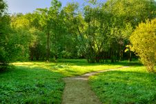 Free Morning In Forest Royalty Free Stock Image - 8260336