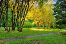 Free Morning In Forest Royalty Free Stock Photography - 8260367