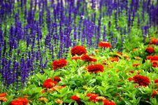Free Two Flower Border Pieces Stock Images - 8260424