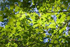 Free Trees Crown Stock Photo - 8260440