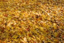 Free Fallen Leaves Stock Photos - 8260573
