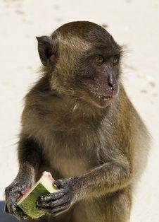 Free Monkey Stock Photo - 8260610