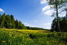 Free Summer Meadow Royalty Free Stock Image - 8262176