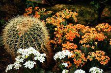 Free Prickly Cactus Plant Royalty Free Stock Photo - 8262325