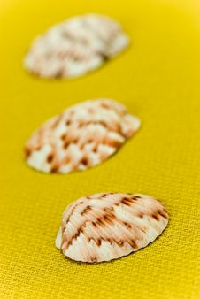 Free Sea Shells Composition On The Golden Background Stock Photography - 8262892