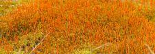 Free Moss Stock Image - 8264381