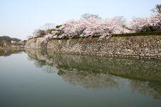 Free Cherry Blossom Stock Image - 8265301