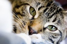 Free A Kitten Stock Images - 8265544