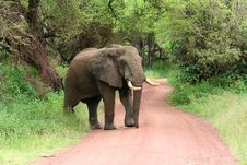 Free Elephant On Road Stock Photo - 8265570