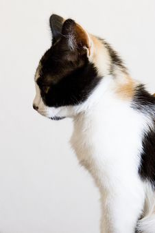 Free A Kitten Royalty Free Stock Photos - 8265588