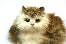 Free Cat Royalty Free Stock Photo - 8269365
