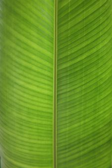 Free Green Leaf Texture Royalty Free Stock Photo - 8269635