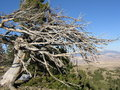Free Dead Tree On Top Of Mountain Royalty Free Stock Image - 8275496