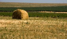 Free Hay Bale Royalty Free Stock Photography - 8270157