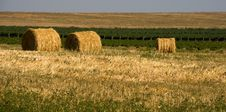 Free Hay Bales Stock Images - 8270224