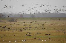 Free Many Happy Landings Stock Photo - 8270230