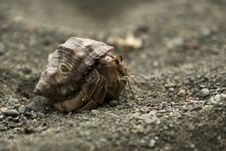 Free Hermit Crab Royalty Free Stock Images - 8270239