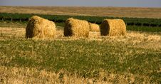 Free Hay Bales Stock Images - 8270604