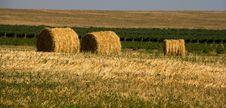Free Hay Bales Royalty Free Stock Image - 8270676