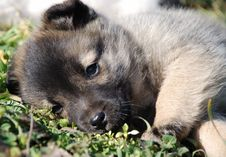 Sad Puppy Rests Royalty Free Stock Images