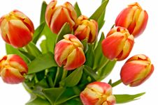 Free Macro Red-yellow Tulip Royalty Free Stock Photography - 8271877