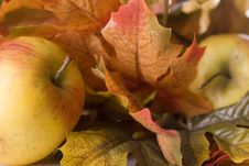 Free Apples With Leaves. Stock Photos - 8272043