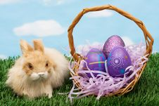 Free Easter Eggs Stock Image - 8272351